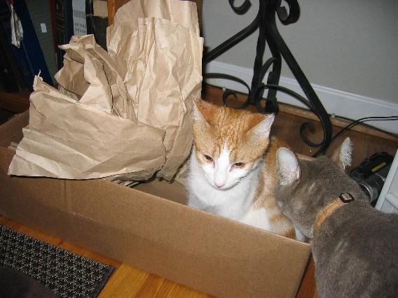 Catsinthecradle