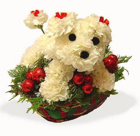 Dogflowersofcourse