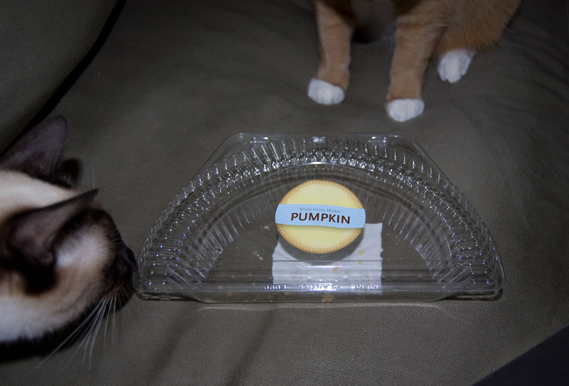 Gadjo-Fennec-pumpkin-container